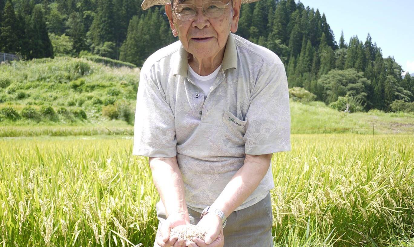信州小谷産梢米 販売します!